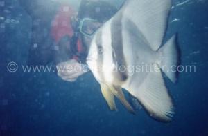 ely con pesce luna